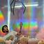 David Floth - Aschaffenburg