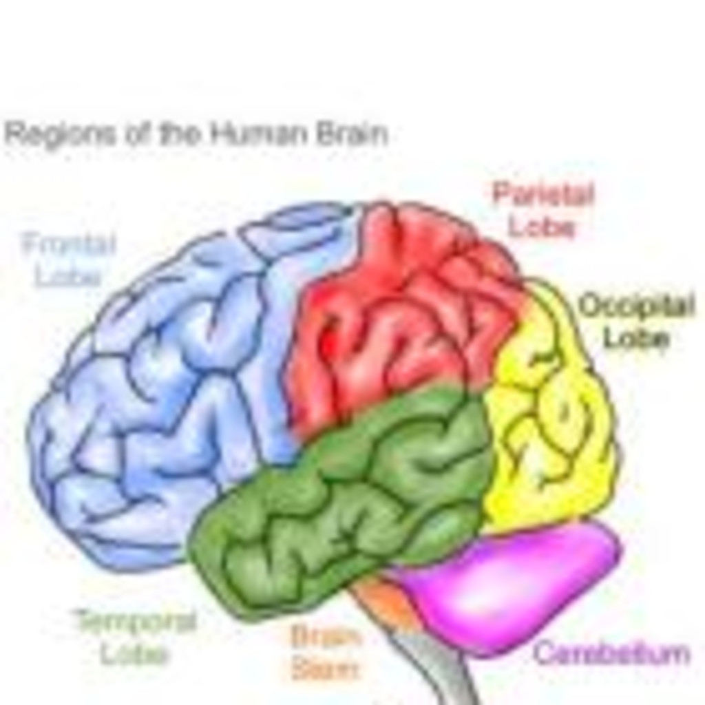 Does Music Affect The Brain? Essay