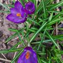 Anke Krause - Bochum