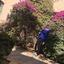 Shahed Sweedan - Amman