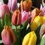 Blumencenter van Paridon
