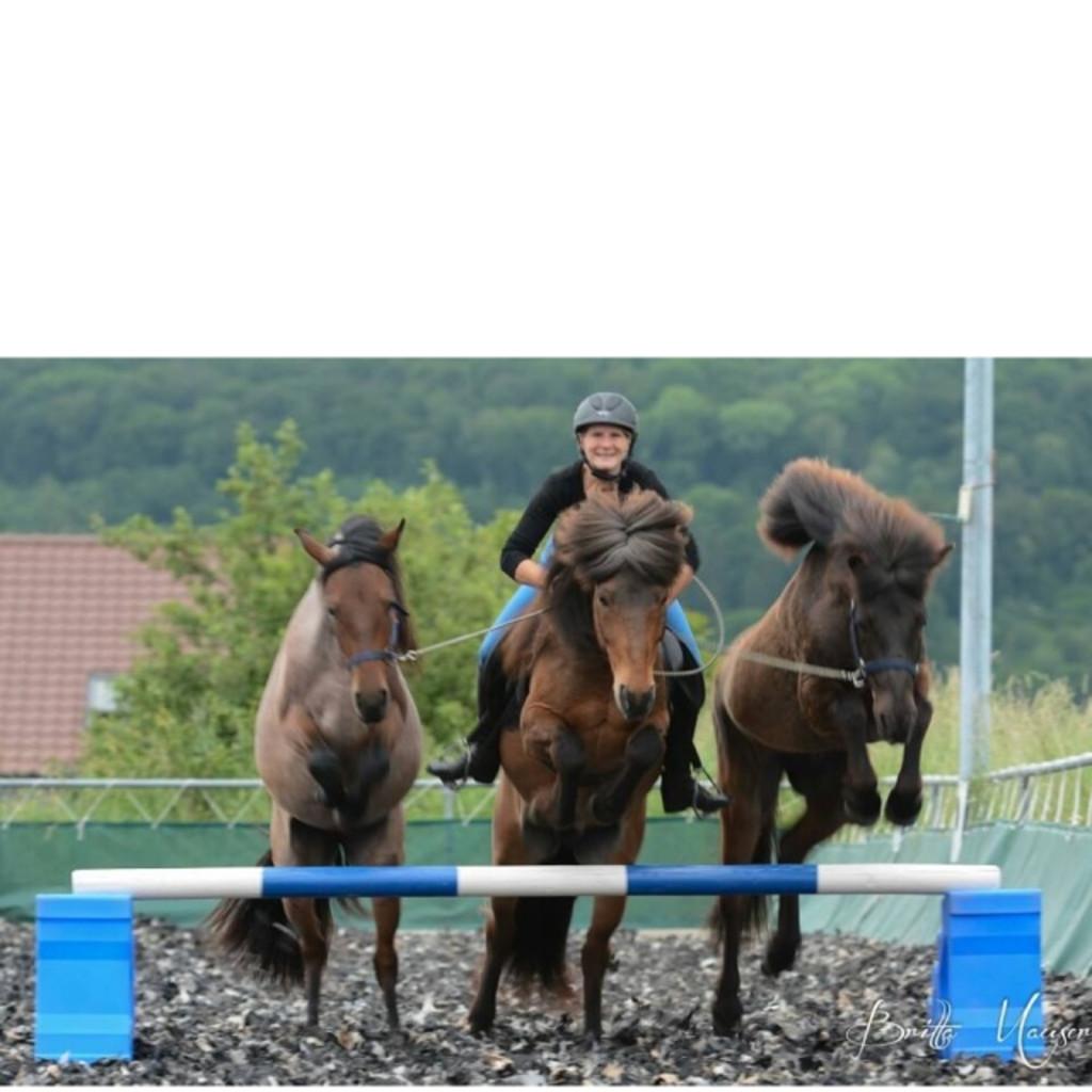 Mirjam Eppinger - Pferdetrainerin - Pferdetraining-Stuttgart | XING
