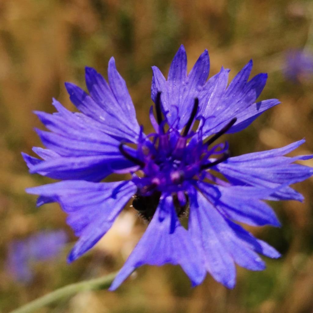 Karin Decker-Frank's profile picture